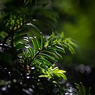 Green by FrankThomas