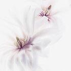 Magnolia Blossom by Rebecca Cozart