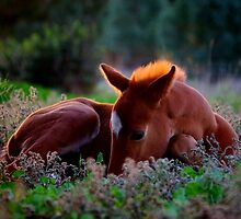 Precious Little - a foal calendar starring Bob by Penny Kittel