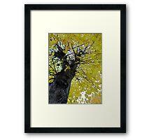 Tall Tree Yellow (1) Framed Print