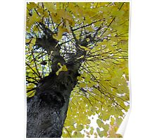 Tall Tree Yellow (1) Poster