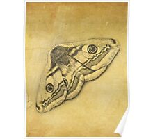 Moth sketch Poster