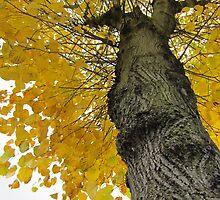 Tall Tree Yellow (2) by Vanessa  Hayat