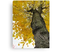 Tall Tree Yellow (2) Canvas Print