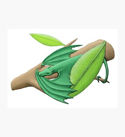 Tiny Green Tree Dragon Photographic Print