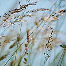 Summer Grass 5 2016  by vigor