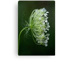 Profile of a Queen - Queen Anne's Lace Wildflower Canvas Print