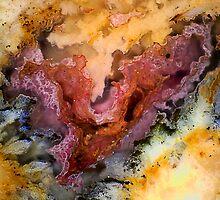 Xenolabia (Plume Agate) by Stephanie Bateman-Graham