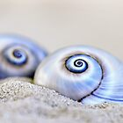 snail shell III by artsandsoul