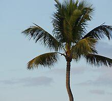 Palm by Scott Dovey