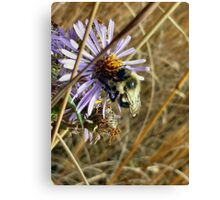 Lone Bee Canvas Print