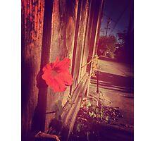 Flower Escape  Photographic Print