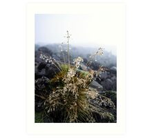 water condensation on a plant Art Print