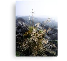 water condensation on a plant Canvas Print