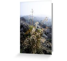 water condensation on a plant Greeting Card