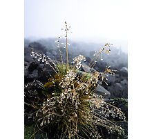 water condensation on a plant Photographic Print