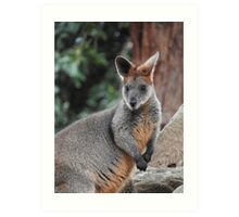 Red-necked wallaby Art Print