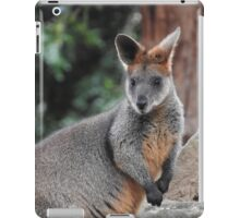 Red-necked wallaby iPad Case/Skin
