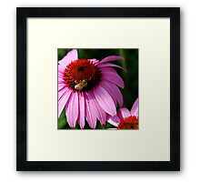 In the Pink 3 Framed Print