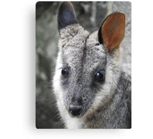 Rock Wallaby Canvas Print