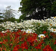 Lilies and Daisies - Preston Temple Grounds by MidnightMelody