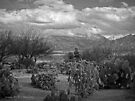 The Desert Floor ~ Snow Covered Mountains ~ Just Another Winter Day in the Desert Southwest by Lucinda Walter