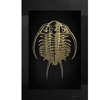Fossil Record - Golden Trilobite on Black #2 Photographic Print
