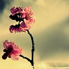 Pink Blossoms And Vase by Evita