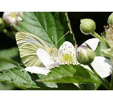 Don't fall in love with me until you know the facts! (Pollen Neckolace) Photographic Print