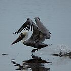 Pelican Takeoff by Scott Dovey