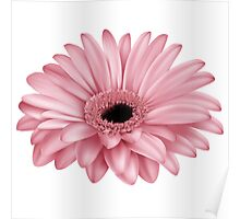 flower pink nature plant plants spring beauty Poster
