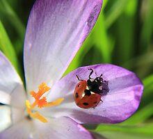 Saffron seeker by missmoneypenny