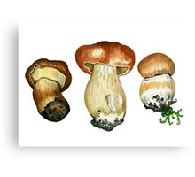 Wild mushrooms. Hand drawn watercolor painting Canvas Print