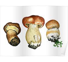 Wild mushrooms. Hand drawn watercolor painting Poster