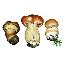 Wild mushrooms. Hand drawn watercolor painting Photographic Print