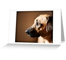 The Solace of Light Greeting Card