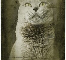 Vintage Cat by Tara Golden