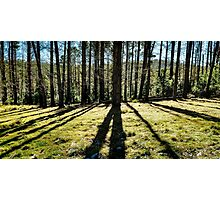 Forest Shadows Photographic Print