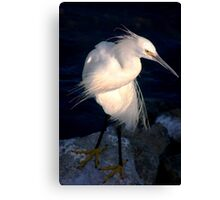 Snowy egret or heron Canvas Print