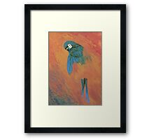 Mysterious Macaw Framed Print