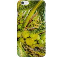 Bunch of green coconuts in palm tree iPhone Case/Skin
