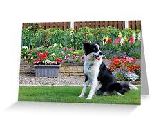 Border Collie Garden Greeting Card