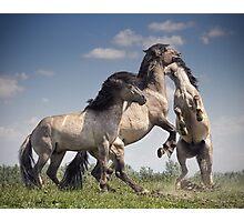 Dancing Horses Photographic Print