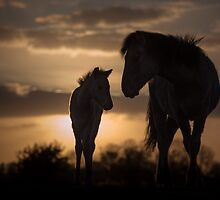 Sundown by Henri Ton