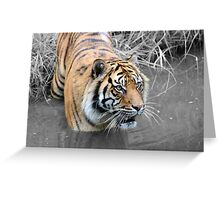 In the jungle... Greeting Card