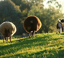 Woolly Jumpers by Carol James