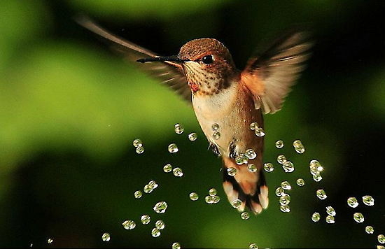 ..TINY BUBBLES..13, 086 views..... by RoseMarie747