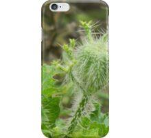 Bull Nettle Fruit iPhone Case/Skin