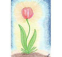 0507 - Red Tulip Shining Photographic Print