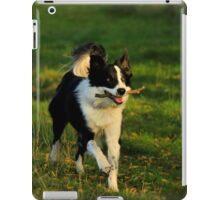 Border Collie - Evening Walk iPad Case/Skin